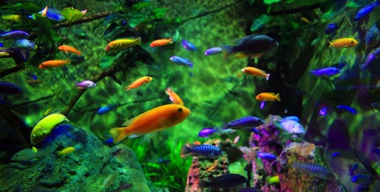 Trang bị những phụ kiện để nuôi cá