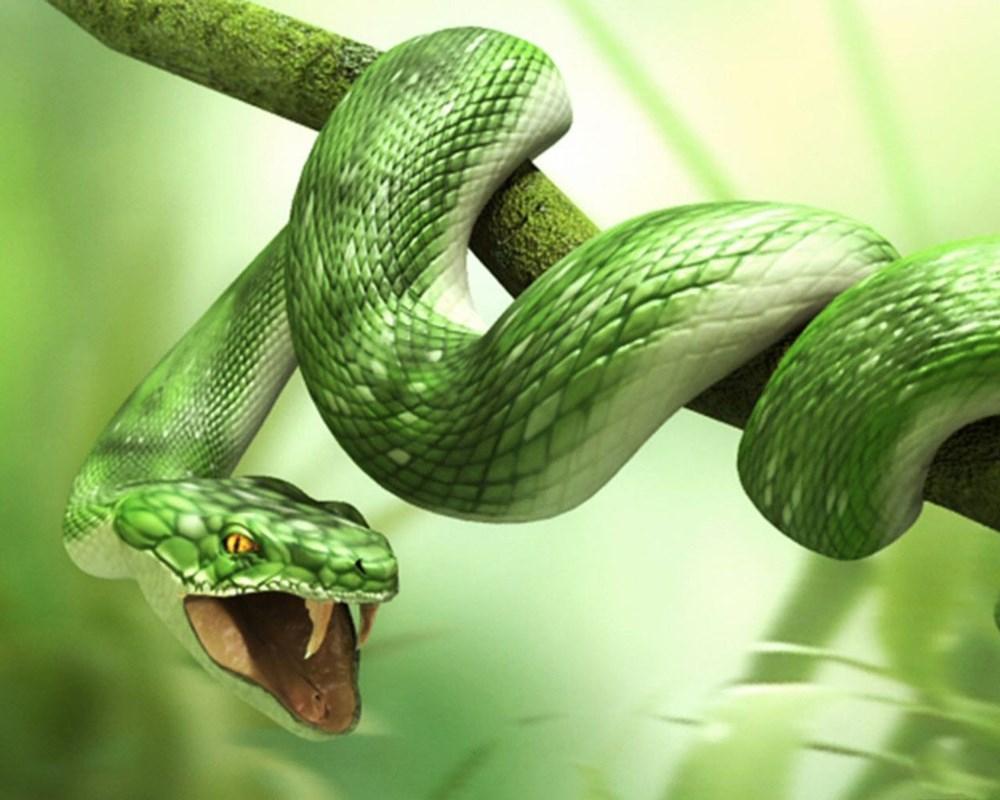 Chiêm bao thấy rắn đánh con gì?