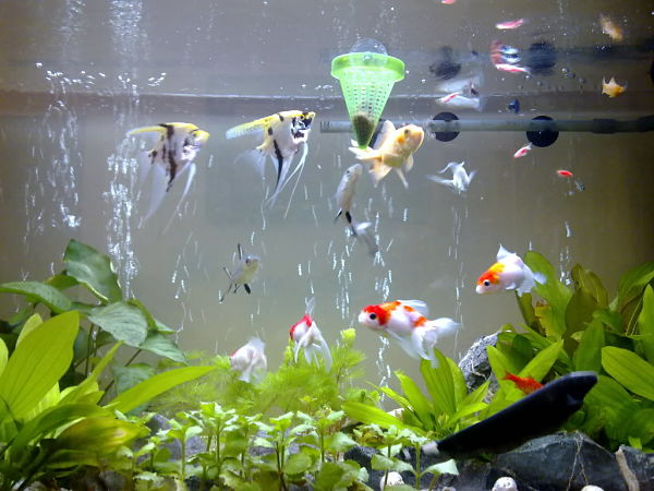 Xử lý bể nước cá cảnh chuyên nghiệp