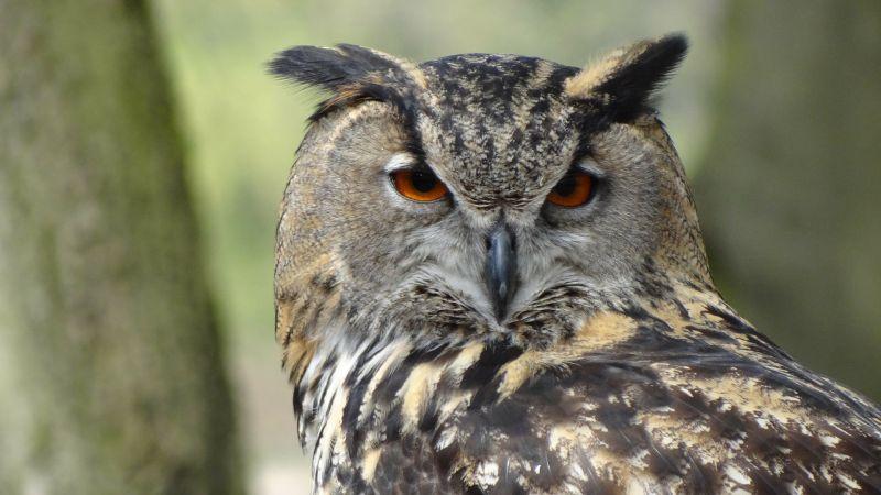 owl-44236_1920