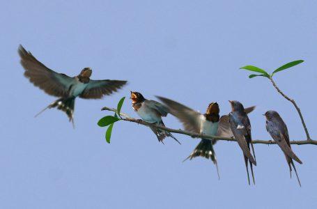 Giải mã giấc mơ thấy chim đánh con gì?