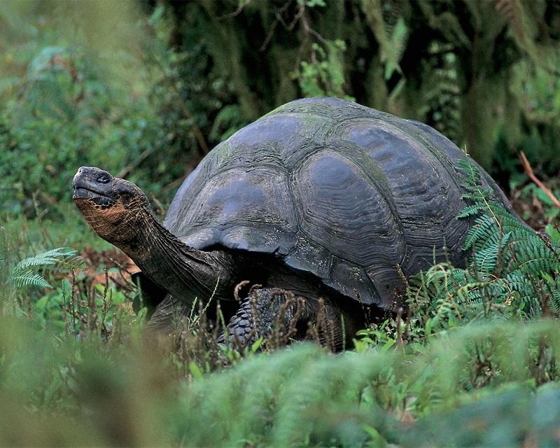 Nằm mơ thấy rùa
