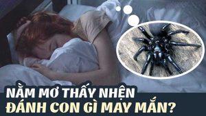 Con nhện số mấy