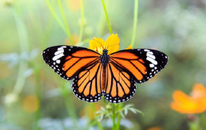 Con bướm số mấy