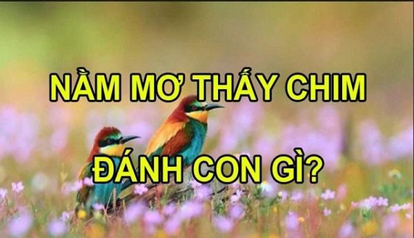 Con chim số mấy